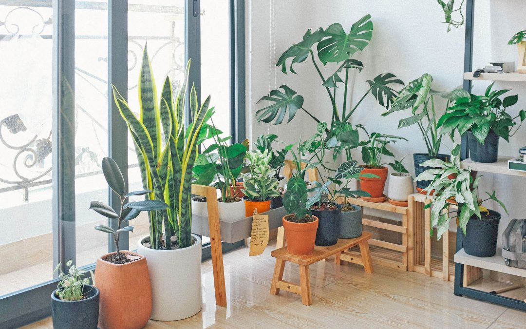 Interjecting Plants Into Your Home