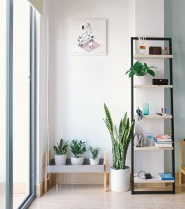 Real plants in an interior